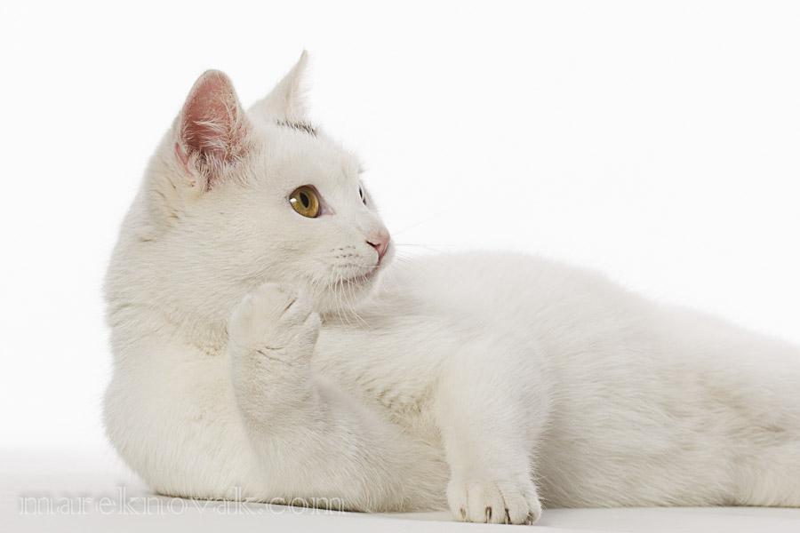 cat lounging